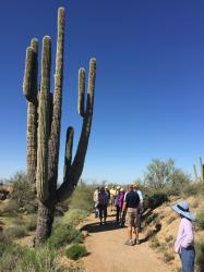 Bill describes a 200-year-old suguaro cactus...